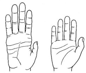 Black and white lawn drawing of a human hand and a chimp hand, showing similarities in DNA